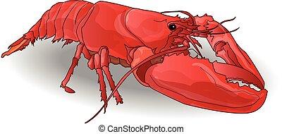 crayfish coocked isolated white background