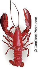 crayfish coocked isolated white background