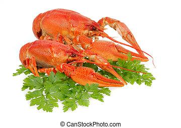 crayfish, europäische