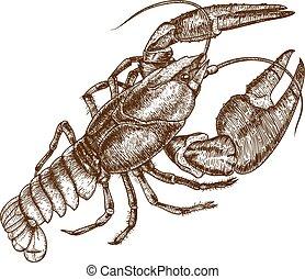 crayfish, illustratie, een