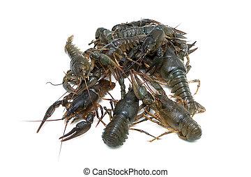 Crayfish isolated on white background close-up.
