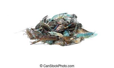 Crayfish on isolated - close up Crayfish on isolated