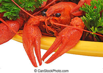 Crayfish - Boiled crayfishes on a dish with parsley and dill