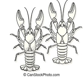 Crayfish vector illustration on a white background.