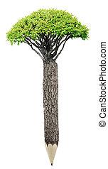 crayon, de, bois, matériel, à, frais, leaves., planète verte, concept