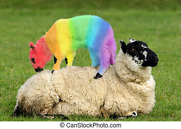 Crazy Baby - Female sheep lying in a field in spring with a...