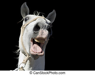 Crazy White Horse Cutout - Frightened White Horse Isolated ...