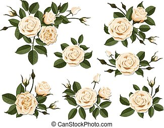 Cream colored rose boutonniere set - Cream colored rose...