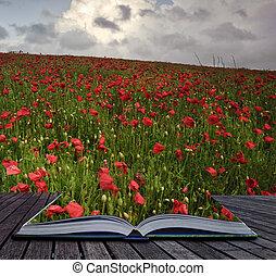 creatief, concept, beeld, van, klaproos, akker, landsape, komen uit, van, pagina's, in, magisch, boek