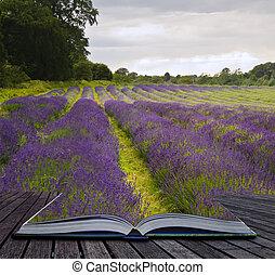 creatief, concept, beeld, van, lavendel, velden, landscape, komen uit, van, pagina's, in, magisch, boek