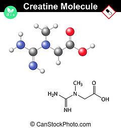 Creatine molecule
