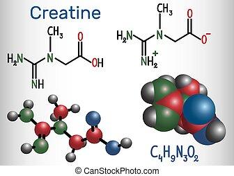 creatine, molecule., molécule, chimique, formule, modèle, structural