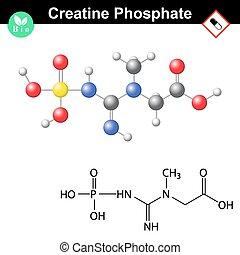 Creatine phosphate molecular structure