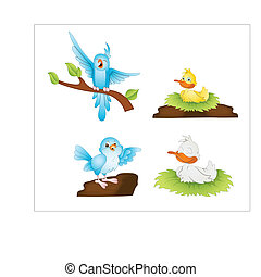 Cartoon Birds Vectors