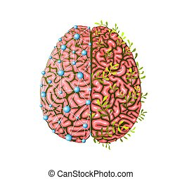 Creative and Logical Human Brain Parts Development