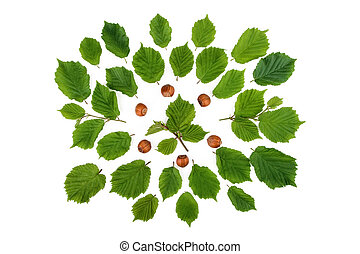 Creative arrangement of filbert nuts with leaves on white. Flat lay, top view.