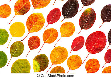 Creative background of colorful autumn leaves.