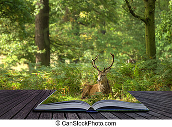 Creative concept idea of Red deer stag in forest coming out of pages in magical book