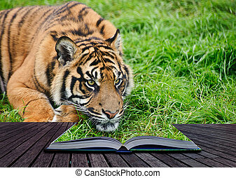 Creative concept image of tiger in pages of book
