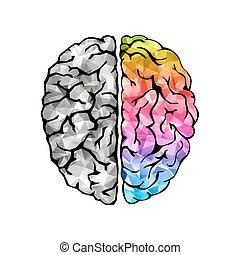 Creative concept of the human brain