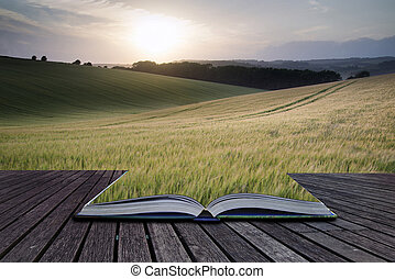 Creative concept pages of book Beautiful Summer landscape of field of growing wheat crop during sunset