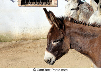 adult mule - Creative design of adult mule