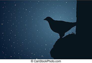 bird in the night sky