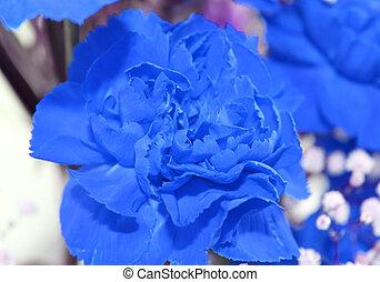 Blue fllower