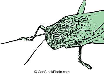 green grasshopper illustration - Creative design of green...