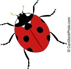 ladybug insect illustration