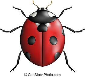 nice ladybug insect illustration