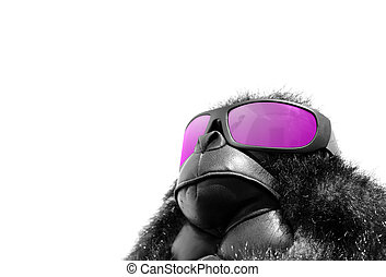 Sunglasses monkey