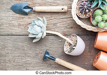 Creative flat lay gardening desk with Succulent and Cactus plants in pot and garden tools