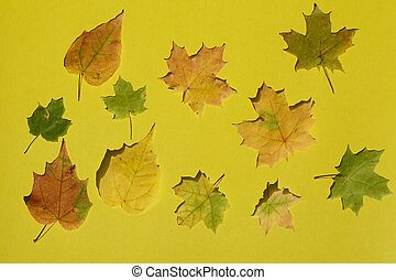 Creative top view   color autumn leaves of maple,    as background in minimal style, template for lettering,