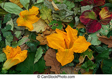 Creative top view  dry color autumn leaves and flower zucchini (pumkin)  as background with copy space in minimal style, template for lettering