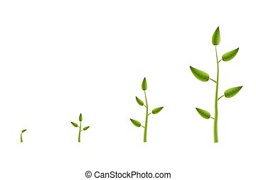 Creative vector illustration of growth up green tree with leaf isolated on background. Business cycle diagram development. Art design seedling gardening plant life. Abstract concept graphic element