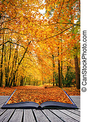 creativo, concepto, idea, de, hermoso, otoño, otoño, bosque,...
