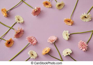 creativo, patrón, de, vario, colorido, gerberas, en, un, papel rosa, plano de fondo
