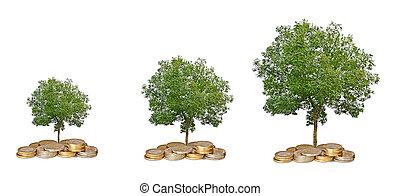 crecer, coins, árbol