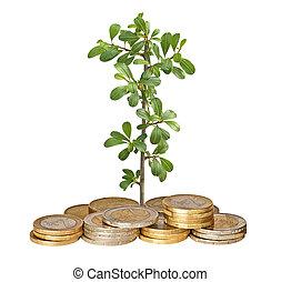 crecer, coins, planta de semillero