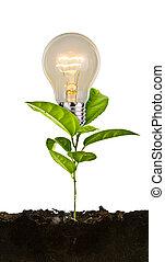crecer, planta del bulbo, tierra