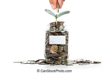 crecer, planta dinero, moneda, paso
