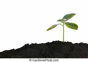 crecer, planta joven, en, mañana, luz del sol, blanco, plano de fondo