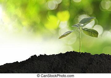 crecer, planta joven, en, mañana, luz del sol, en, naturaleza, plano de fondo