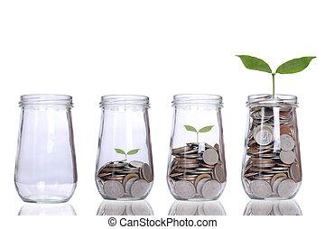 crecer, planta, paso