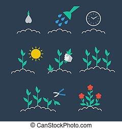 crecer, planta, secuencia