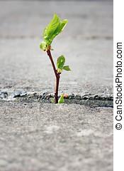 crecer, por, pavimento, árbol, grieta