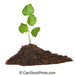 Crecer est ril tierra planta de semillero foto de - Tierra para semilleros ...