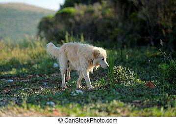 crecido, exterior, arriba, perro