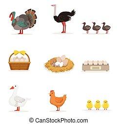 crecido, huevos, orgánico, carne, granja, colocar,  vector, ilustraciones, animales, Conjunto, agricultura, Aves